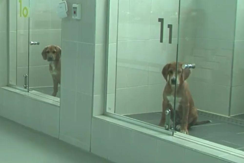 (VIDEO) BESMRTNI LJUBIMCI: U Južnoj Koreji kloniraju pse bogatih vlasnika