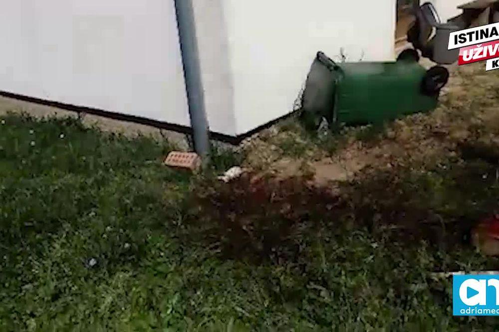 (KURIR TV) NA MESTU UŽASA U PETROVARADINU: Komšija se do smrti borio sa pobesnelim psima!