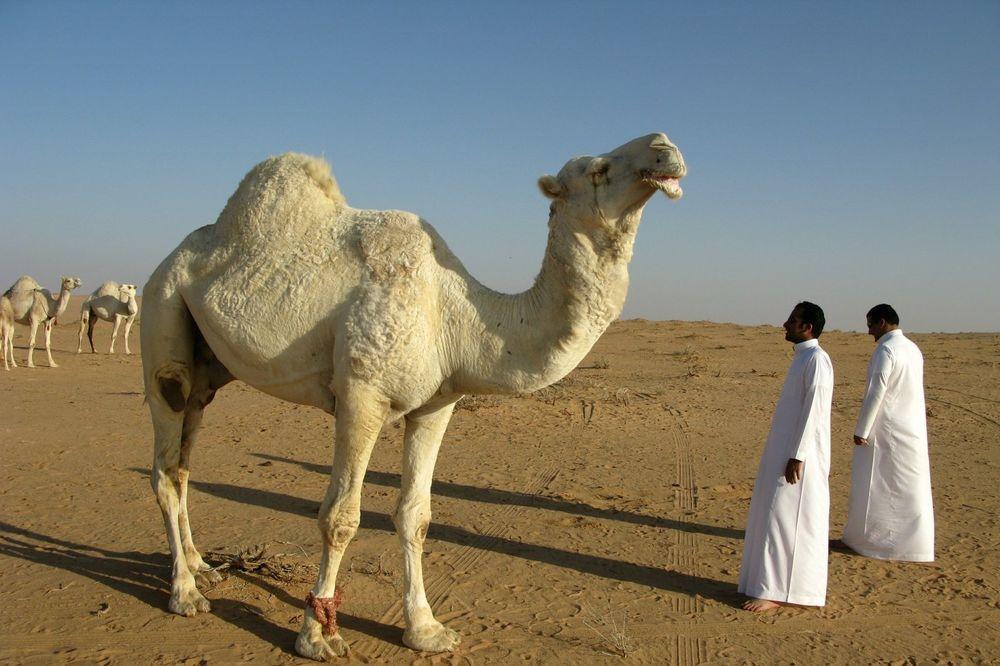 Kriza u Saudijskoj Arabiji: Potrošen najveći izvor vode na svetu, slede velike nestašice
