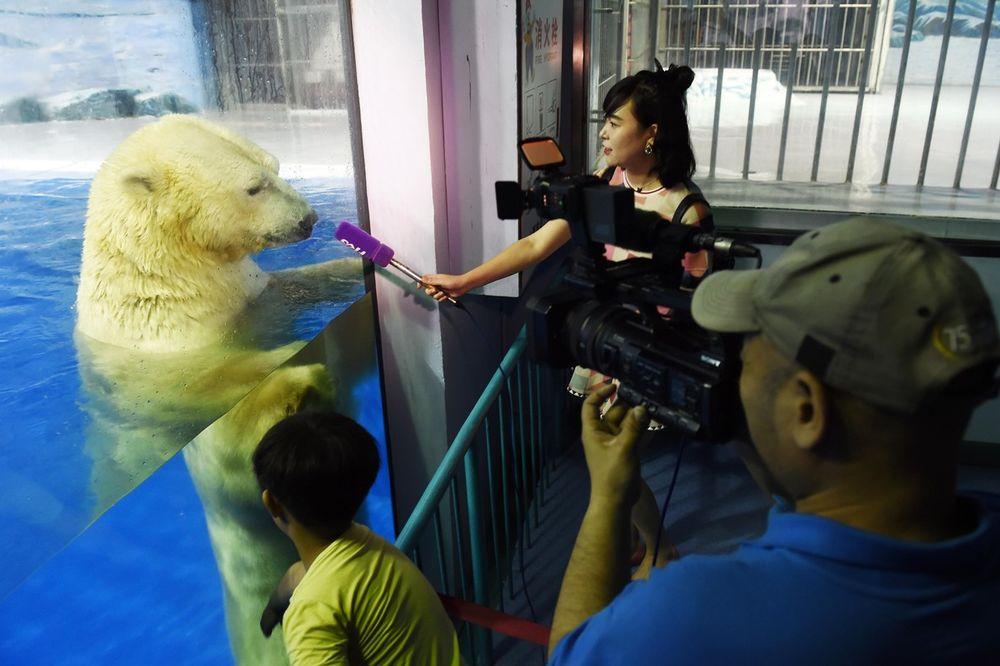 (VIDEO) SRCE DA VAM PREPUKNE: Zarobili medveda u šoping centru kao bi pravili selfije!