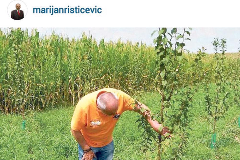 SAJBER-SELJAK: Rističević se na Instagramu hvali fotografijama s njive!