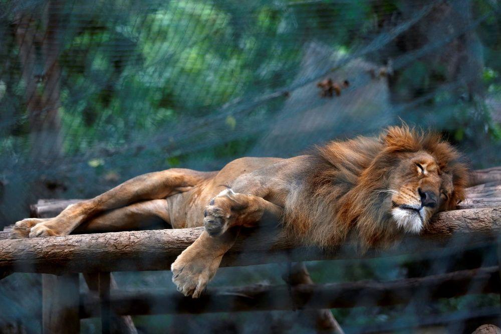 ČITAVA ZEMLJA GLADUJE: 50 životinja skapalo od gladi u zoo vrtu, bile bez hrane i po dve nedelje