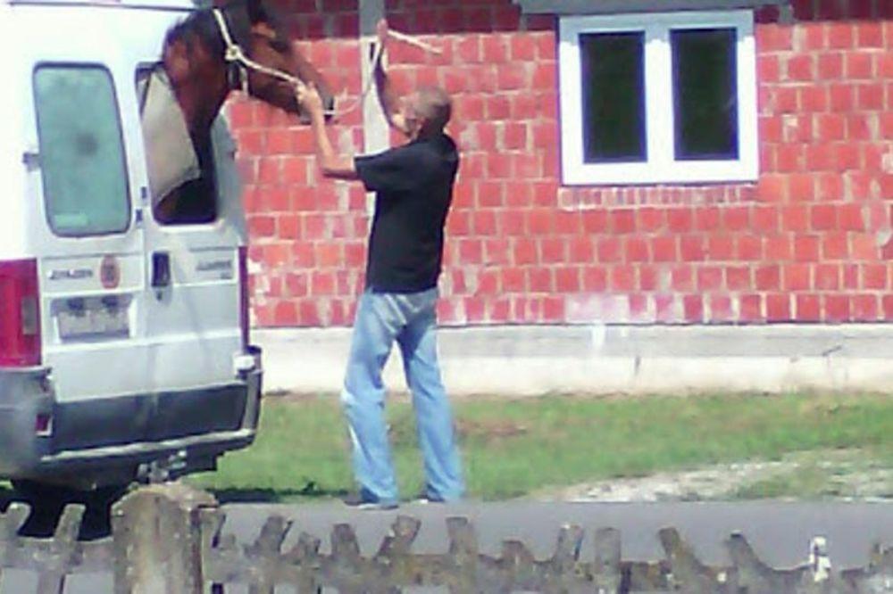 (FOTO) SNAŠAO SE: Nije imao bolju ideju, pa je ubacio konja u kombi