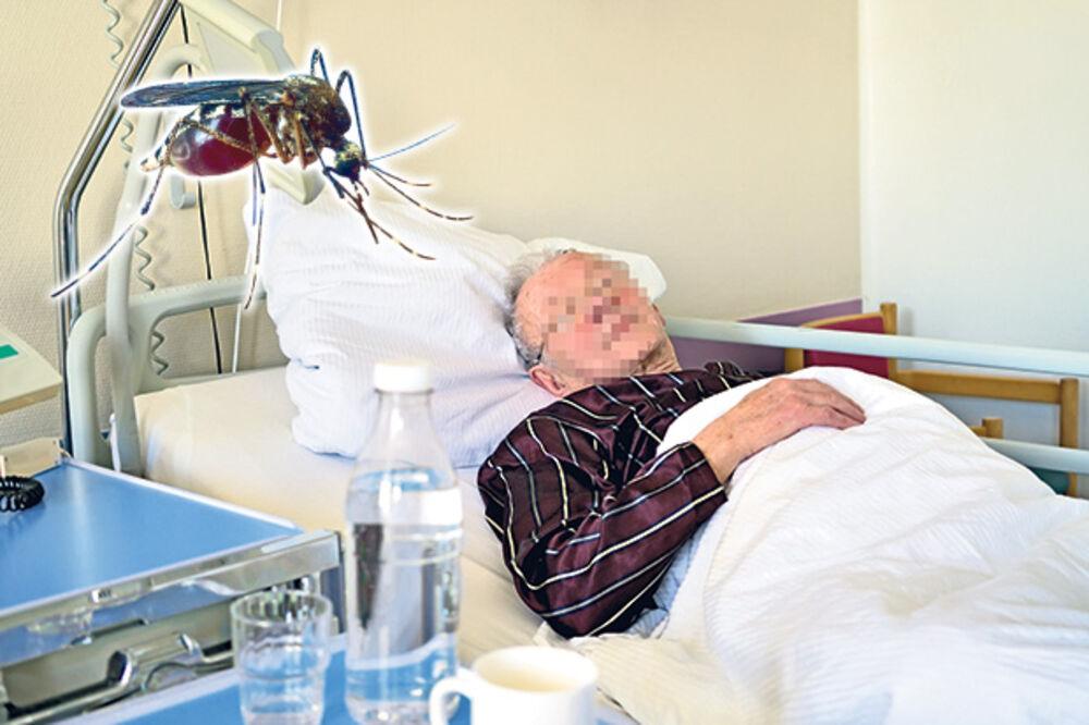 PALA I 48 ŽRTVA: Virus Zapadnog Nila opet ubija po Srbiji!