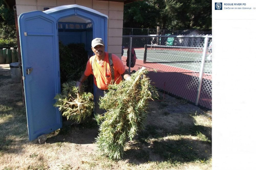 (FOTO) NAJVEĆA ZAPLENA IKADA: U parku pronašao mobilni toalet pun marihuane