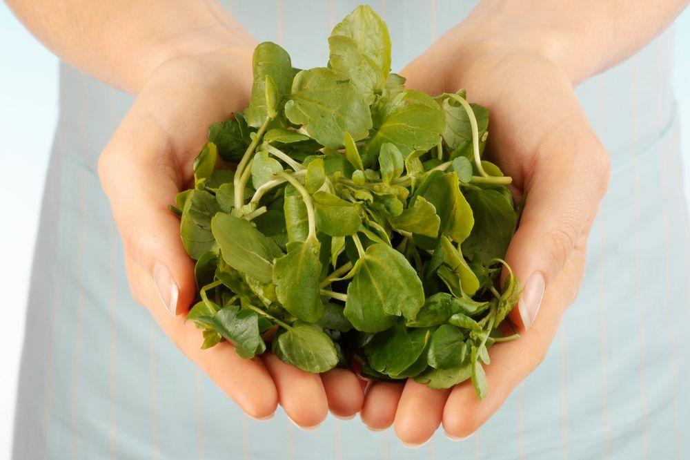 ZAUSTAVLJA UVEĆANJE TUMORA: Neverovatno zdrava biljka kojom je i Hipokrat lečio!