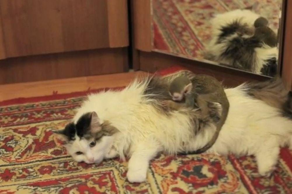 (VIDEO) Ruska mačka usvojila bebu majmuna