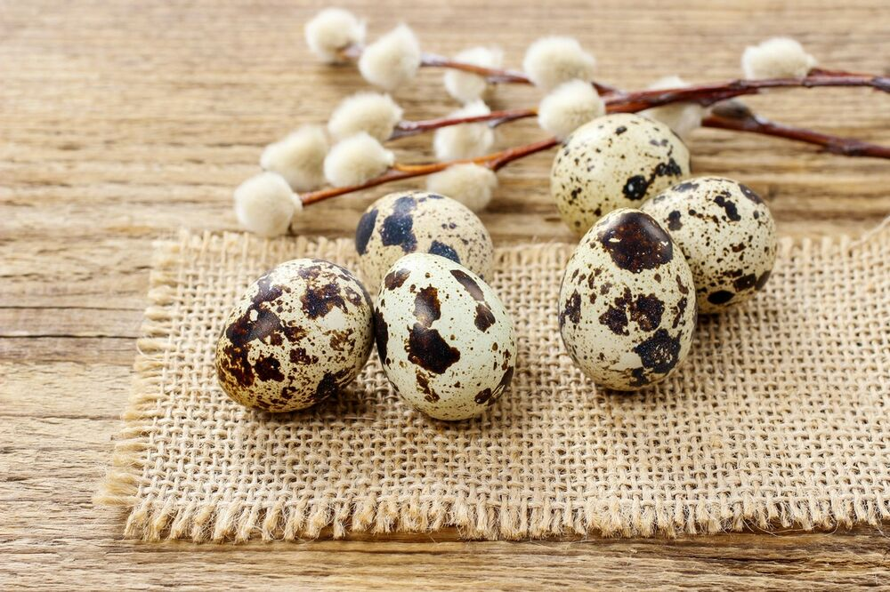 PREPOROD TELA ZA 49 DANA: Lečenje jajima prepelice čini prava ČUDA za vaš organizam!