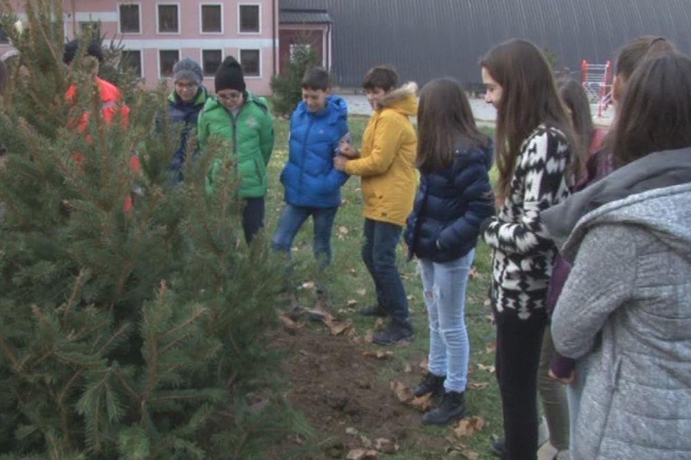 SADNJA 75 ČETINARA: Svi prvaci u Novom Pazaru dobili svoje stablo