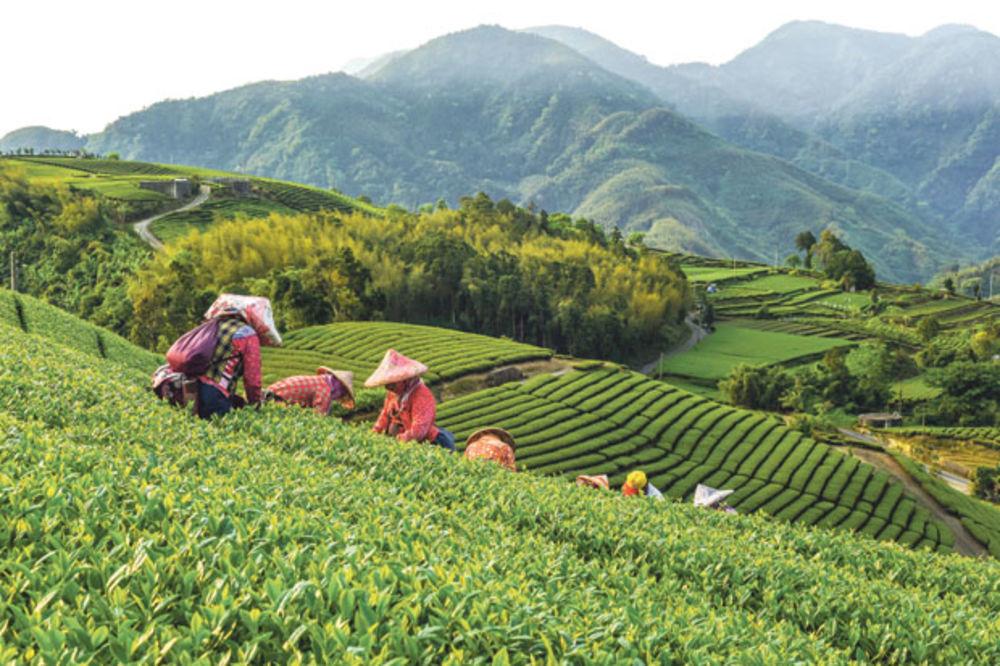 Pamuk i šećer iz Kine diktiraju kretanja na tržištu u 2017.