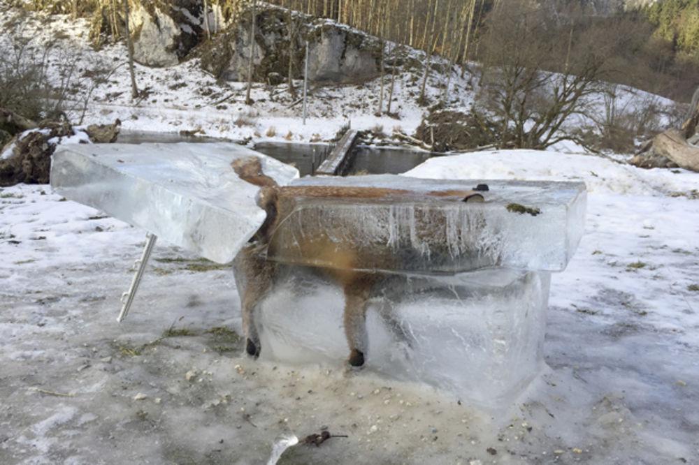 Zaleđena lisica
