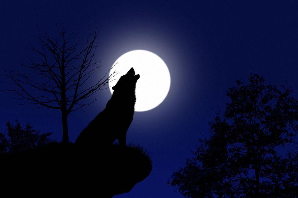 PREKRETNICA ZA SVE: U noći između 23. i 24. januara je VUČJI MESEC! Evo šta TREBA DA URADITE!