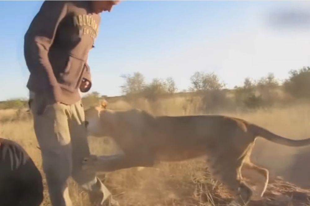 (VIDEO) NASTRADALI SU OD ZVERI: Ovo su ŽIVOTINJE koje su UBILE svoje TRENERE!