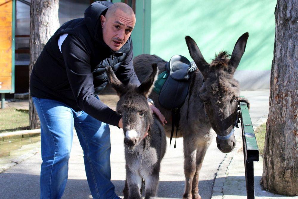 (FOTO) JAGODINSKO MAGARENCE DOBILO IME: Mališani odlučili da se zove...!