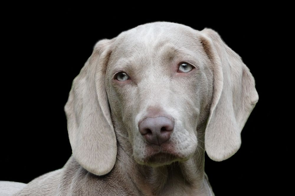 SAMO U SRBIJI, ČUDO U KNIĆU: Odbornici predložili psa za pomoćnika predsednika opštine