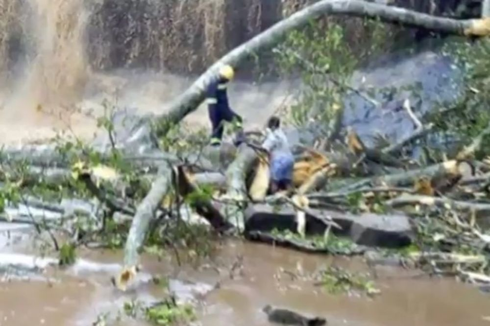 VODOPAD SMRTI U GANI: Drvo palo u bazen i ubilo 18 ljudi