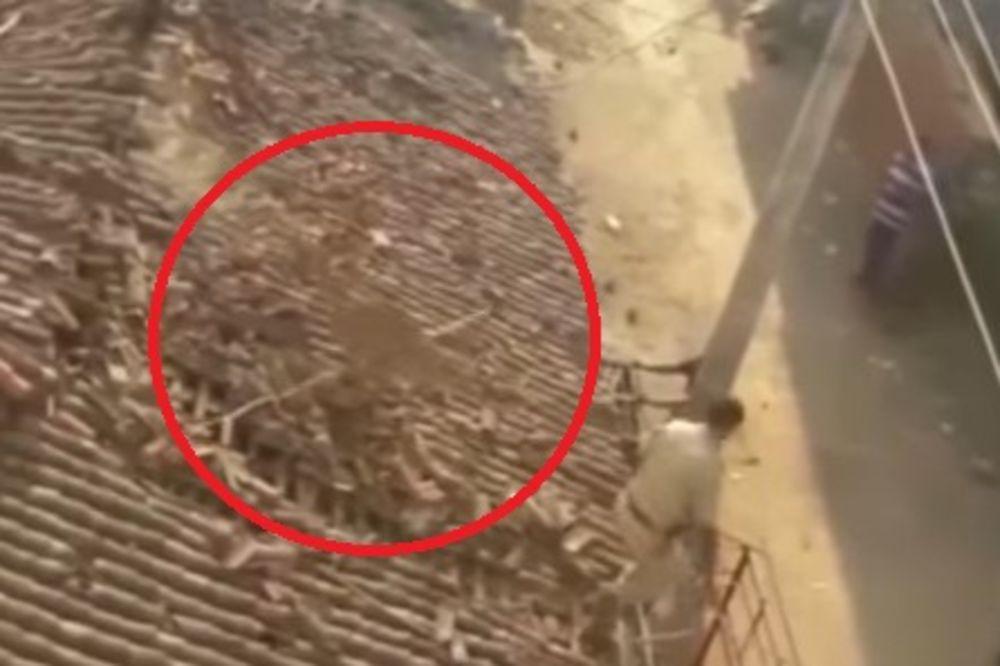 (VIDEO) HARAO SELOM I NAPRAVIO HAOS: Divlja ZVER izgrizla dečaka i bacila muškarca s krova