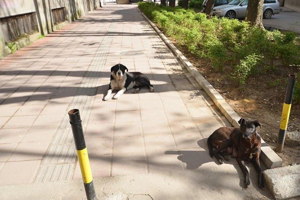 ZADOBILA RANE PO TELU: Vaspitačicu izujedao pas lutalica ispred vrtića u Nišu!
