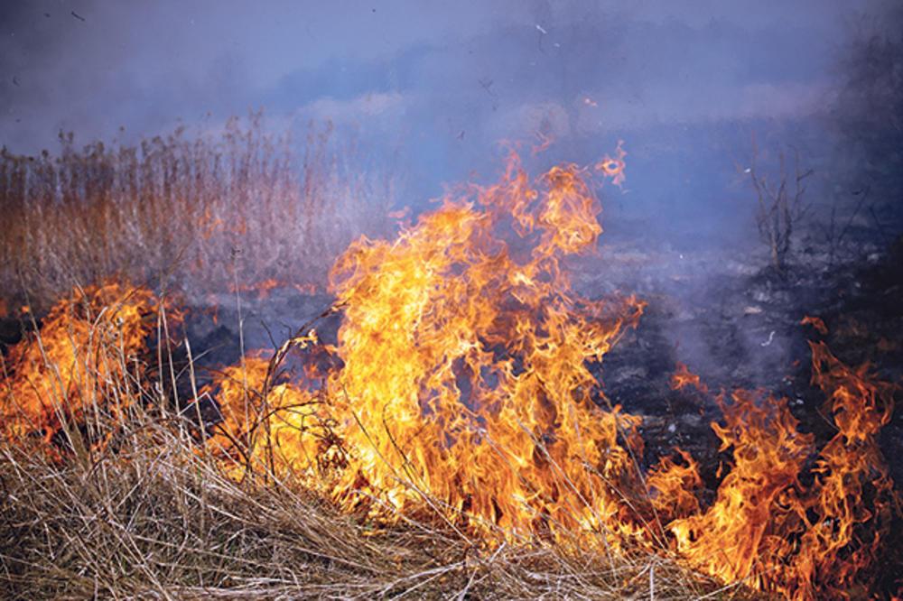 POŽARI KOD BORA PRETE KATASTROFOM: Vatra kod sela Oštrelj se približava skladištu sa 100 TONA MUNICIJE!