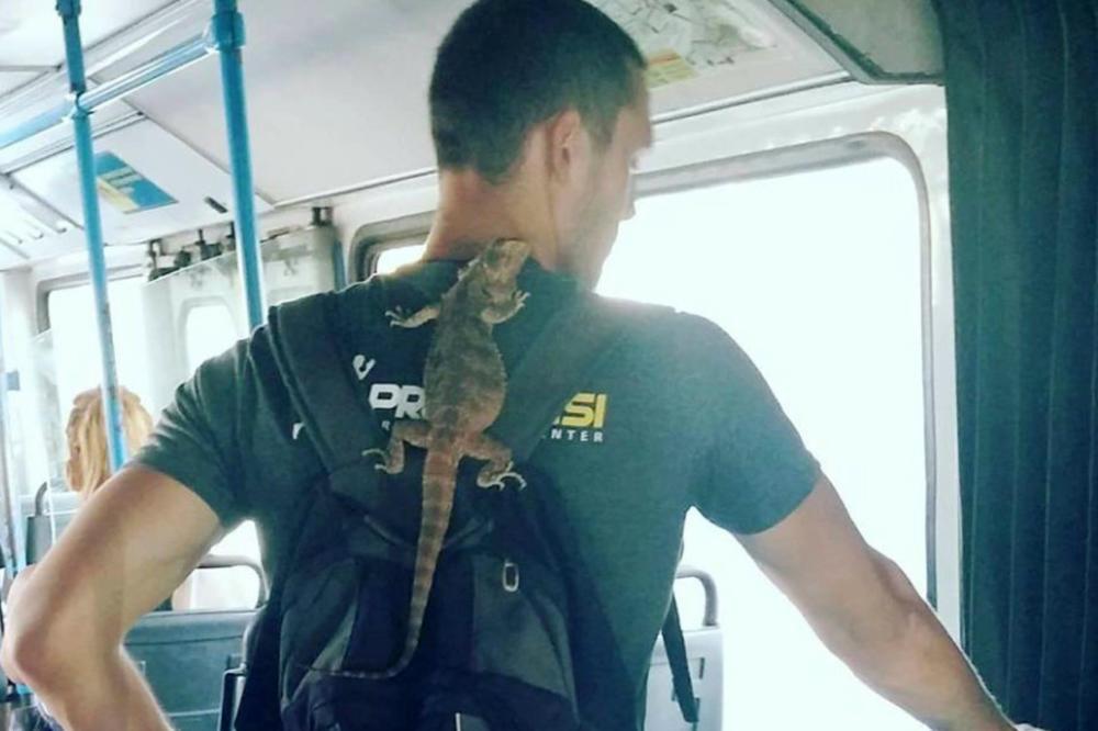 (FOTO) ATRAKCIJA U NOVOSADSKOM PREVOZU: Mladić ušao u gradski bus, a evo zašto su svi gledali u njegova leđa!