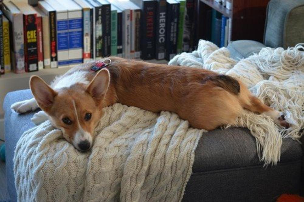 ISTRAŽIVANJE DOKAZALO: Ni psi ne mogu da spavaju od stresa!
