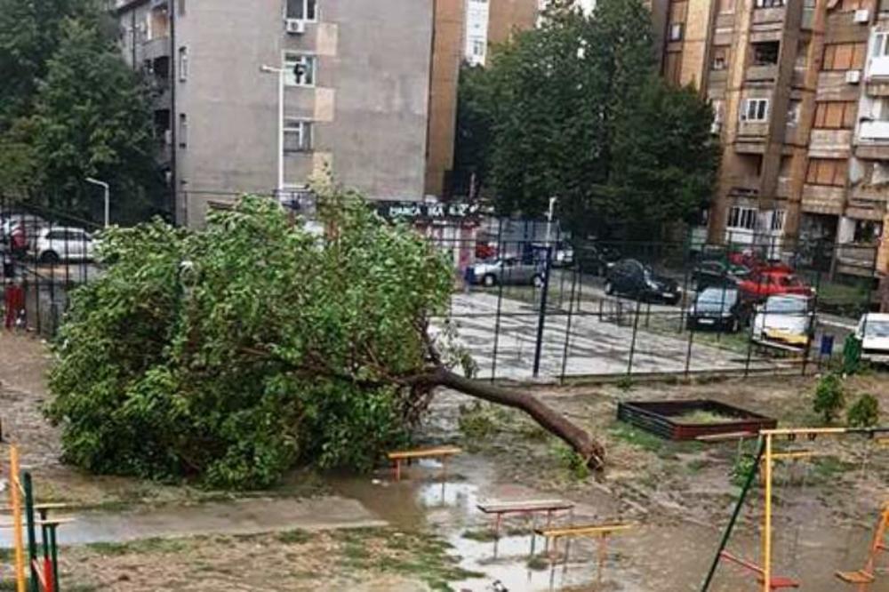 (VIDEO) LESKOVAČKA IRMA: Olujno nevreme protutnjalo Leskovcem, vetar nosio kontejnere i čupao drveće iz korena