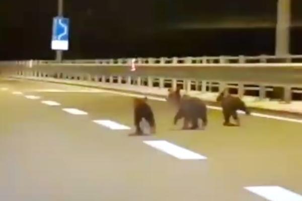 (VIDEO) IZNENAĐENJE NA PUTU: Vozač snimio tri preslatka medvedića
