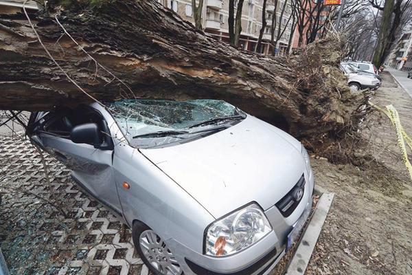 PAŽNJA: Evo šta da uradite ako oluja obori drvo na kola