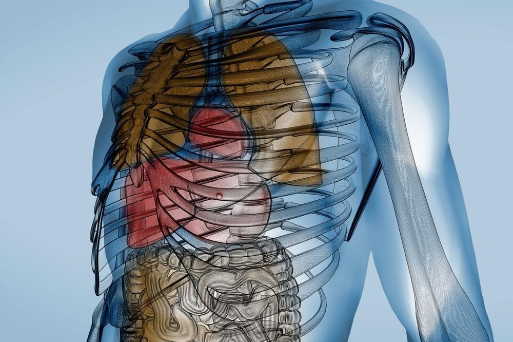 IAKO SVAKI DEO TELA IMA ODREĐENU ULOGU: Možete da živite bez ovih 7 organa, a evo kako!