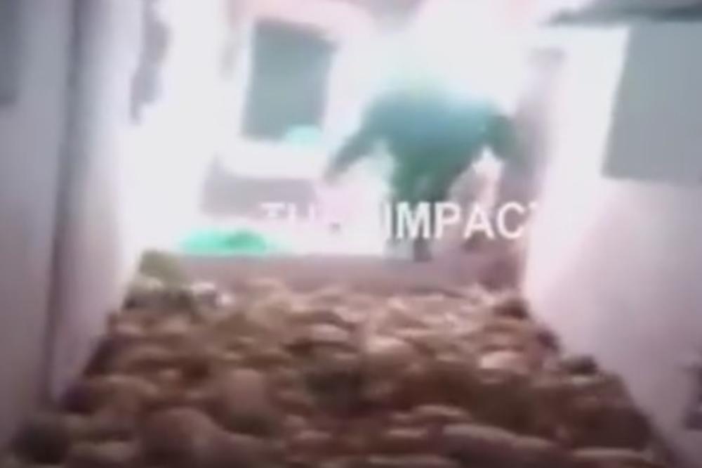 (VIDEO) DEBELI FARMER STOMAČINOM POBIO 79 PRASIĆA: Pogledajte kako se iživljavao nad jadnim životinjama!