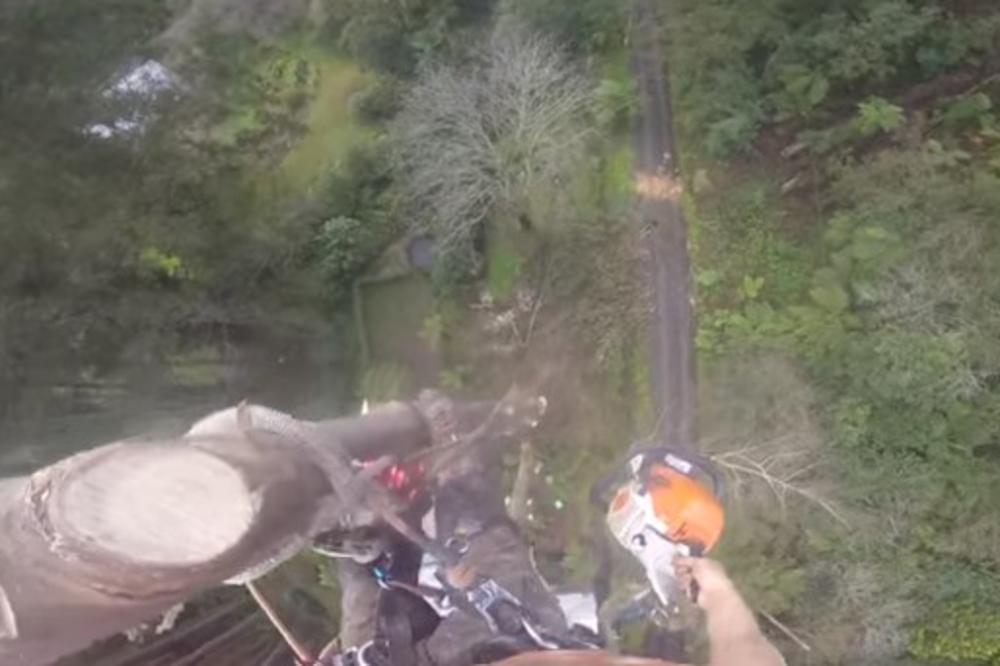 (VIDEO) ZAVRTEĆE VAM SE U GLAVI: Popeo se na drvo visoko 45 metara, pa ga isekao motornom testerom! Sve je snimio kamerom!