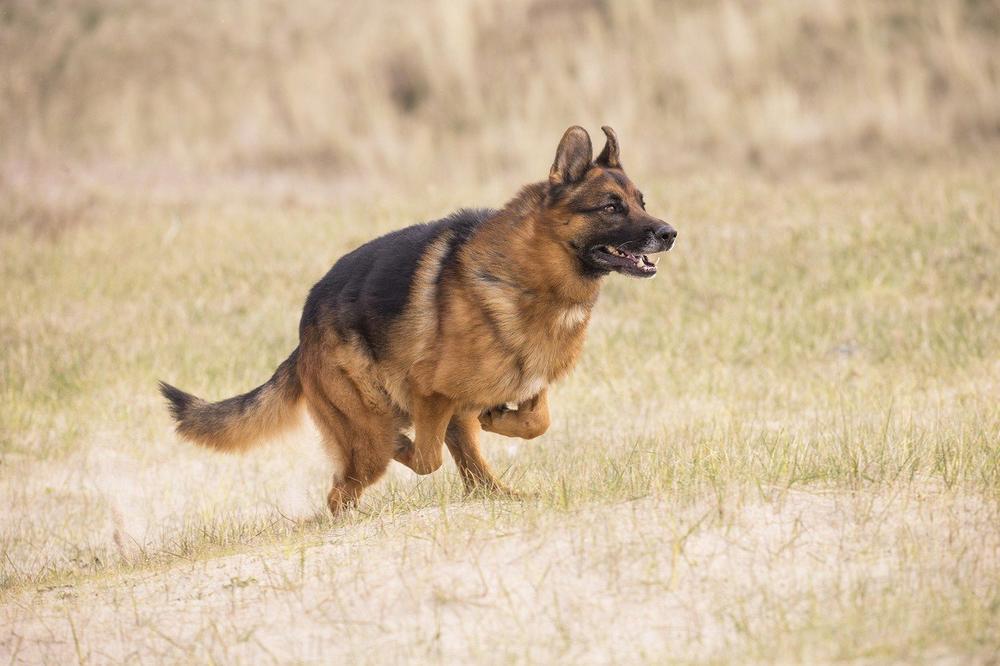 VUČJAK PRVI OSETIO VATRU I SPASAO CELU PORODICU: Da nije bilo komšijinog psa, ko zna kako bi se sve završilo