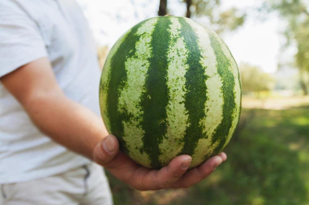 OBOGATIO SE: Sapleo se o lubenicu i zaradio 7,5 miliona dolara!