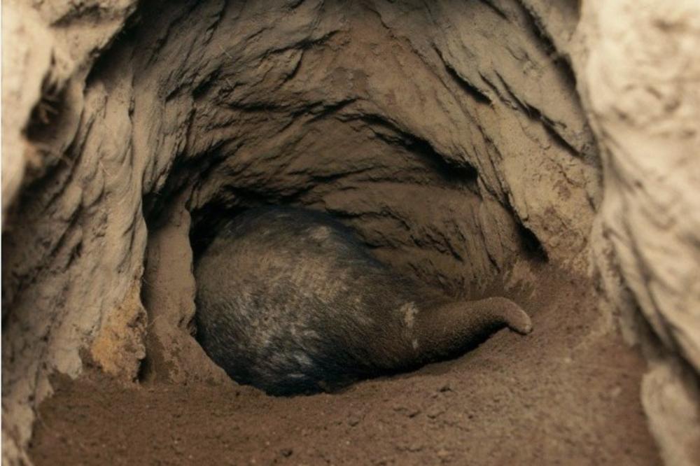 (VIDEO) PLJAČKA KAO NA FILMU: Iskopali tunel ispod banke i odneli 250.000 dolara!