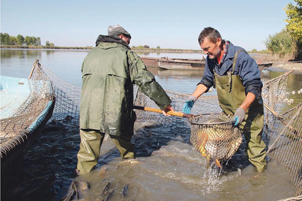 PROIZVODNJA ĆE TEK DA CVETA: Profit leži u uzgoju ribe