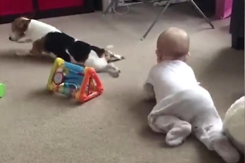 EVO ZAŠTO JE NAJBOLJI PRIJATELJ ČOVEKA! Neodoljiva kuca uči bebu kako se puzi!