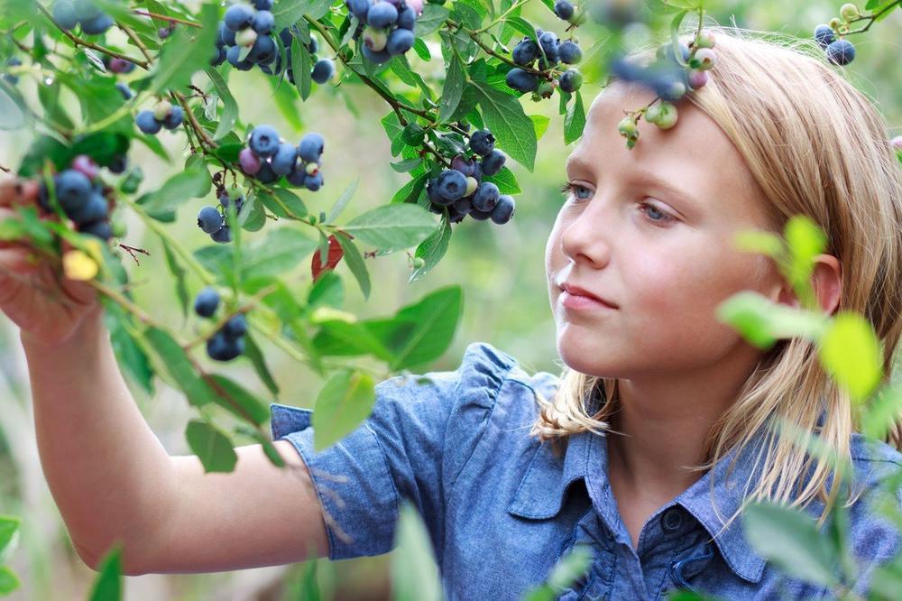ČUDESNA BOROVNICA LEK ZA SVE: Ako svako jutro pojedete samo 5 plodova, evo kakav će uticaj to imati na vaš organizam