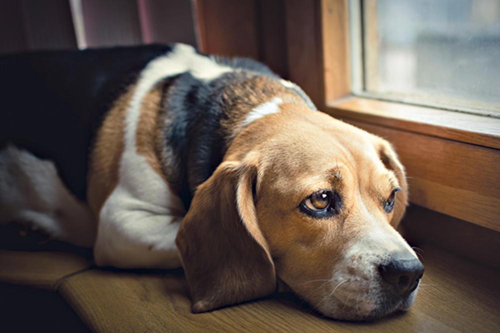 OVA PRIČA ĆE VAM SLOMITI SRCE: Pas čeka vlasnika već godinu dana na stanici kod Kuršumlije, a ne zna da se on nikada više neće vratiti...
