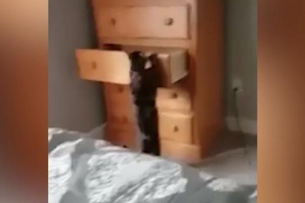 (VIDEO) OVO DEFINITIVMO NISTE VIDELI DO SAD  Mačka sama otvara i zatvara  fioku od ormana u kojoj spava! 7 245ed26bd7d