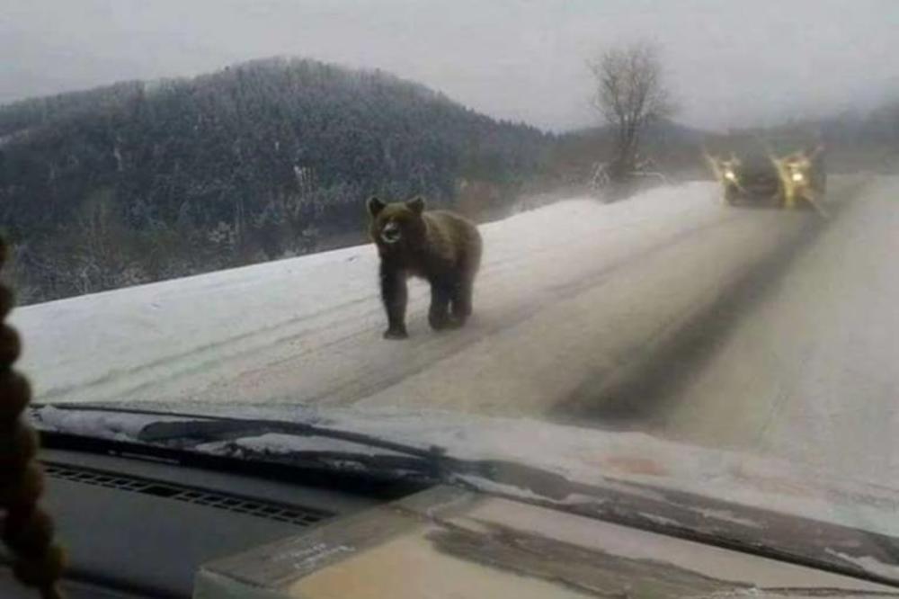 MEDA NA SNEGU: Vozače sačekalo veliko iznenađenje na putu