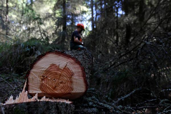 TESTERA ME JE KIDALA, VIDEO SAM SVOJE ORGANE: Ispovest Svetislava, drvosece iz Novog Sela, kome je srce kucalo u rasporenim grudima!