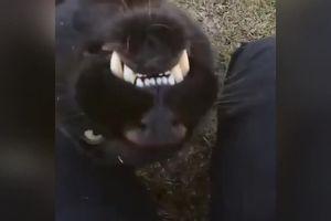 besplatni crni maca vedios