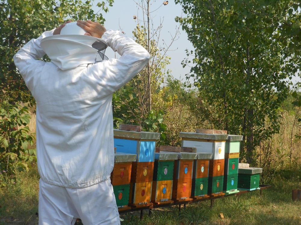 POMOR PČELA U KIKINDI, PČELARI OČAJNI! Godinama nas truju, sad je je stradalo nekoliko stotina košnica (FOTO)