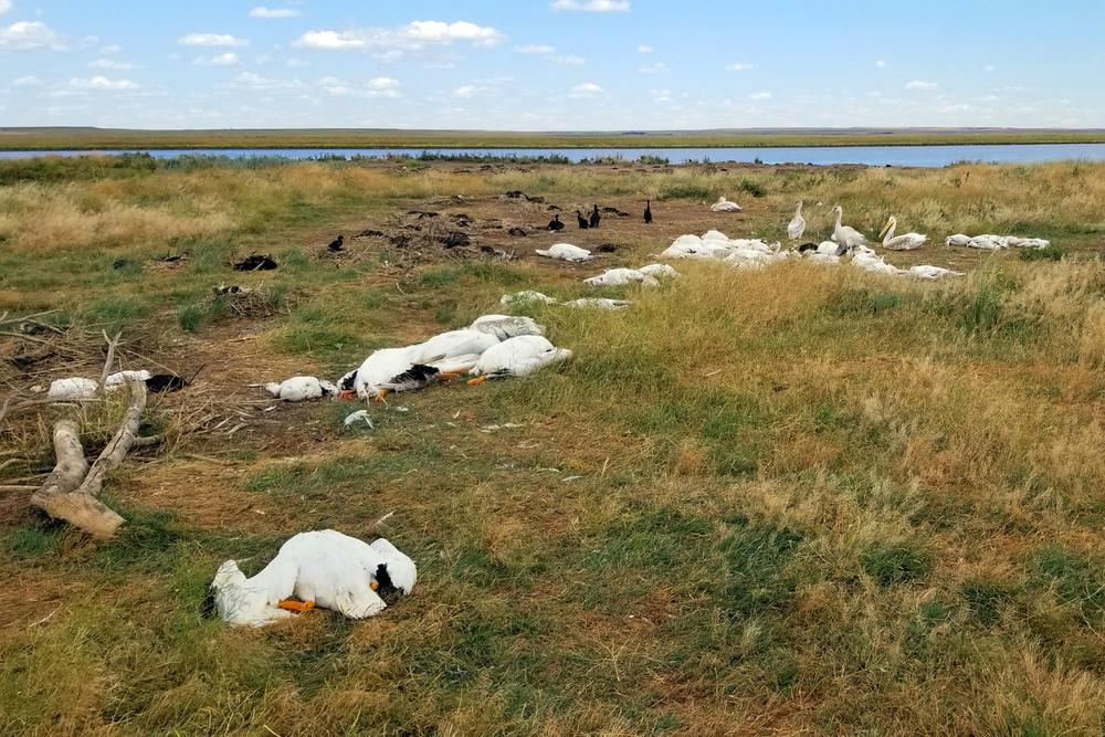 PRIZORI KAO IZ HOROR FILMA: 11.000 ptica palo mrtvo sa neba, a ubrzo je stiglo objašnjenje ovog fenomena
