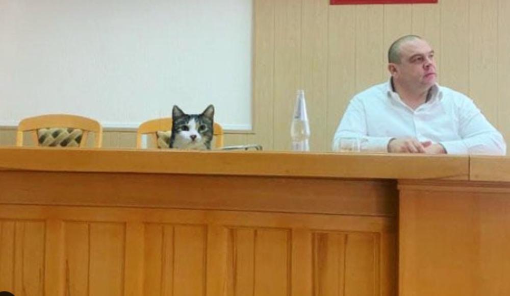 Slikovni rezultat za mačak kipiš gradska uprava