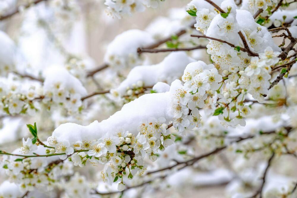 Sneg u aprilu