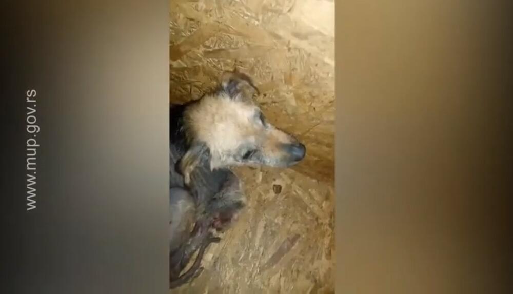 Vučjak, Hapšenje, prihvatilište za pse, Zlostavljanje životinja, Kragujevac, D.G.