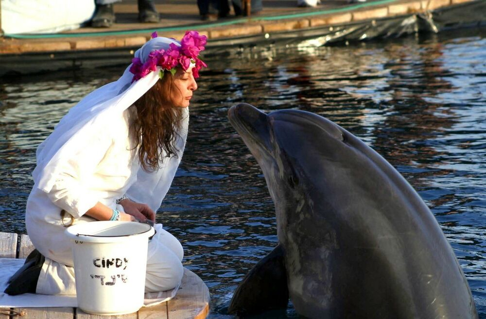 venčanje sa delfinom, Šeron Tendler