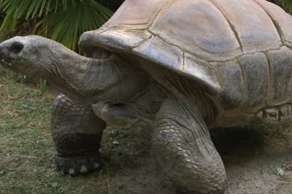 UMRLA KORNJAČA ŠURLI: Bila je najstariji stanovnik Šenbruna, u bečkom  zoo-vrtu živela od 1953. godine