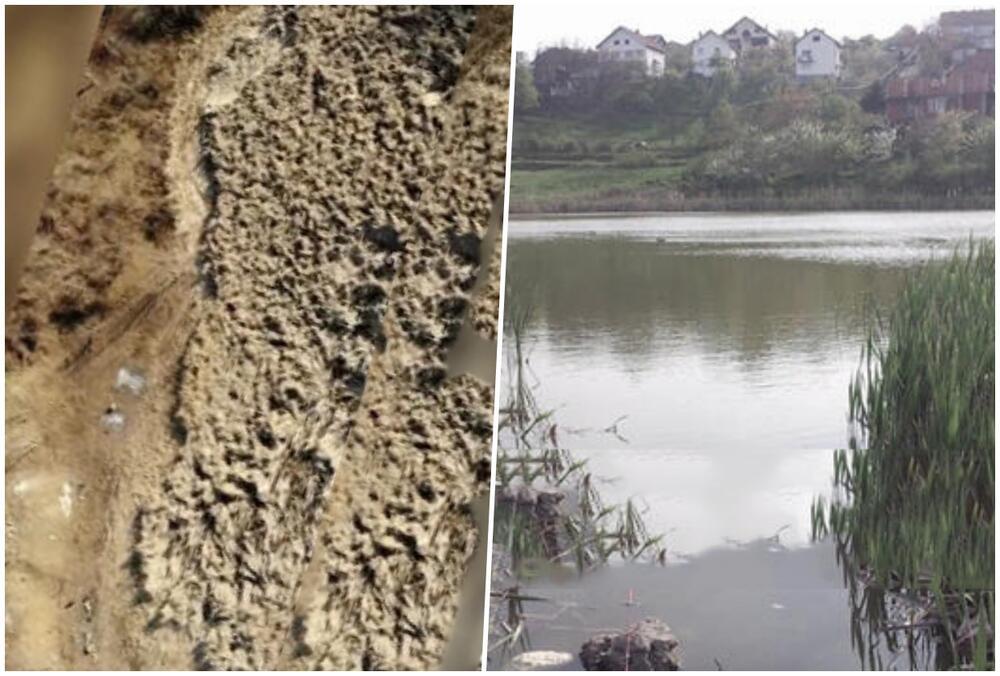 VRATILI ŽIVOT U RAKINU BARU! Udruženi građani Sremčice obnovili kraško jezero, sa vodom došle ribe, patke i rode